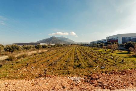 East Attica industrial plot 24.000 sqm for sale